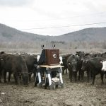 And Heres The Camera Upstate New York Amid Field Cows