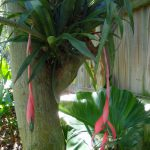 More Cool Tropical Plants Can Find Exotica