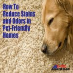 Reduce Stains Odors Pet Friendly Homes Americlean