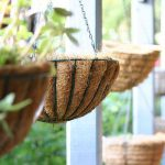 Which Indoor Hanging Houseplants Suit Your Home Organic